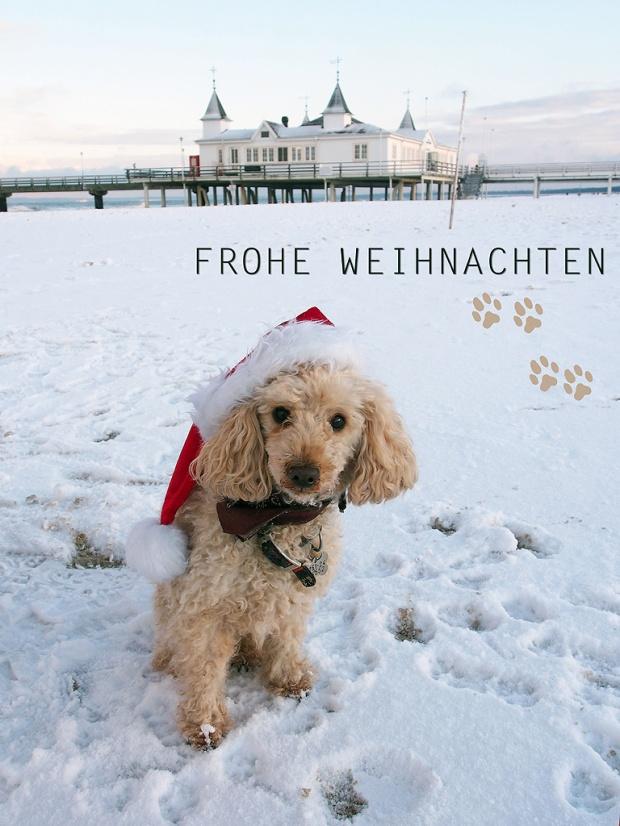 Frohe Weihnachten! Foto: Mandy Knuth